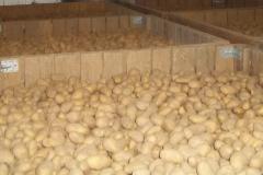 Kartoffellager_2