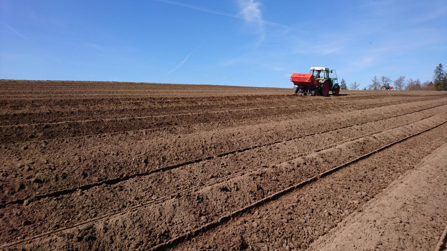 Kartoffeln auspflanzen 2021